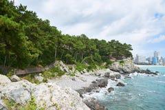 Caminho ao longo da costa da ilha de Dongbaek foto de stock royalty free