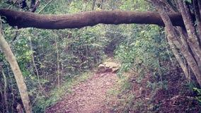 Caminho através da selva Fotos de Stock Royalty Free