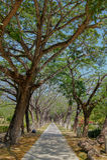 Caminho através das árvores arqueadas Fotografia de Stock