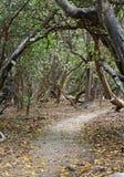 Caminho através das árvores do Pisonia Fotos de Stock