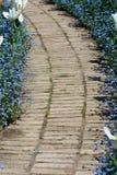 Caminho através das flores azuis. fotos de stock