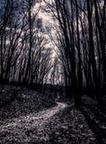 Caminho através das madeiras assustadores Foto de Stock Royalty Free