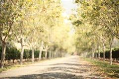 Caminho borrado com swirly bokeh maravilhoso foto de stock