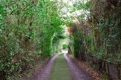 Caminho coberto de vegetação detalhado colorido longo Imagens de Stock Royalty Free