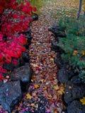 Caminho colorido Fotos de Stock Royalty Free