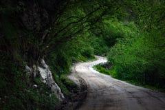 Caminho curvado da estrada na floresta na luz e nas sombras imagem de stock