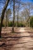 Caminho da floresta Foto de Stock