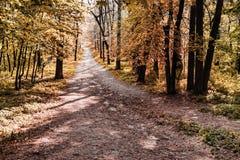 Caminho da floresta do outono Imagem de Stock Royalty Free