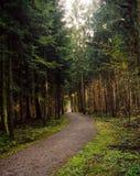 Caminho da floresta no outono fotografia de stock royalty free