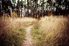 Caminho da maneira de estrada do trajeto com as árvores em Autumn Yellow Forest Fotos de Stock