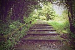 Caminho da montanha Fotografia de Stock