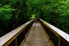 Caminho da ponte da floresta Imagens de Stock Royalty Free