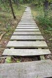 Caminho de madeira Foto de Stock Royalty Free