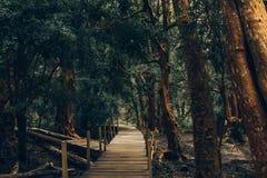 Caminho de madeira através da floresta 'arrayà de árvores do ¡ n 'em Bariloche, Argentina Alaranjado-como a madeira, folhas verde fotografia de stock