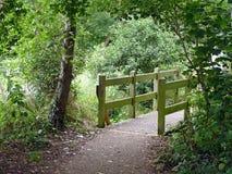 Caminho de madeira na floresta Foto de Stock Royalty Free