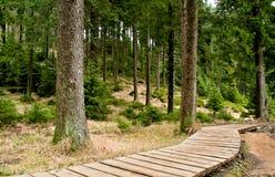 Caminho de madeira na floresta Imagem de Stock Royalty Free