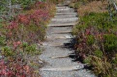 Caminho de pedra no campo Fotografia de Stock Royalty Free