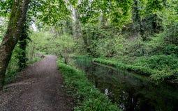 Caminho de sirga ao longo do canal em desuso de Severn e de Tamisa próximo a Chalford, Stroud, Gloucestershire imagem de stock