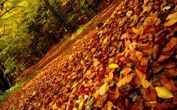 Caminho do outono Fotos de Stock