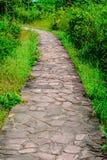 Caminho em um jardim Fotografia de Stock Royalty Free