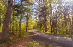 Caminho em um parque público calmo da cidade Fotos de Stock Royalty Free