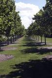 Caminho entre as árvores Imagem de Stock Royalty Free