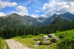 Caminho feito das pedras através do campo e da floresta verdes do pinheiro Imagem de Stock Royalty Free