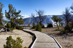 Caminho a Hot Springs no parque nacional de Yellowstone Fotografia de Stock