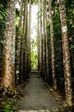 Caminho impressionante no norte de Austrália Imagens de Stock Royalty Free