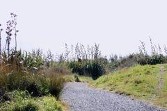 Caminho litoral de Nova Zelândia foto de stock royalty free