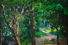 Caminho na estrada de terra verde Marsh Oak Trees assustador da floresta Paisagem sonhadora com árvores nevoentas, caminhos da mo fotografia de stock royalty free