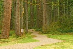 Caminho na floresta Foto de Stock Royalty Free