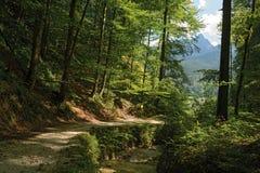 Caminho na floresta alpina verde ao longo da ravina da angra fotografia de stock royalty free