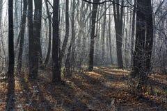 Caminho na floresta coberta com a geada Fotografia de Stock