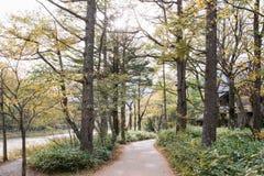 Caminho na floresta com nascer do sol no parque nacional de Kamikochi foto de stock