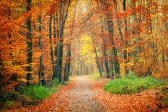 Caminho na floresta do outono Fotos de Stock