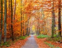 Caminho na floresta do outono Imagens de Stock