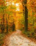 Caminho na floresta do outono Fotos de Stock Royalty Free