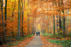 Caminho na floresta do outono Foto de Stock