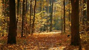 Caminho na floresta do outono video estoque