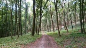 Caminho na floresta em Eslováquia ocidental imagem de stock