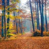 Caminho na floresta nevoenta do outono Fotografia de Stock Royalty Free