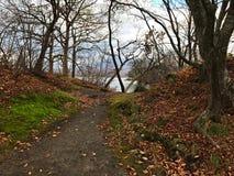 Caminho na floresta no lago lateral Foto de Stock
