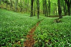 Caminho na floresta verde Foto de Stock Royalty Free