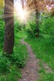 Caminho na floresta verde Fotos de Stock Royalty Free