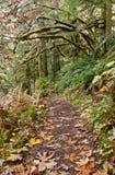 Caminho na natureza com folhas de outono fotos de stock royalty free