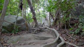 Caminho na selva video estoque