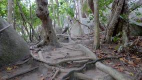 Caminho na selva vídeos de arquivo