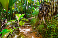 Caminho na selva - Vallee de MAI - Seychelles foto de stock