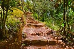 Caminho na selva - Vallee de MAI - Seychelles imagem de stock